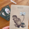 Great Bear Animal Oracle Deck – The Littlest Fry